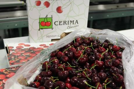 Spanish cherry season to start late and with small volumes