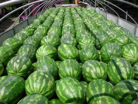 US: Watermelon sales up by 9 percent
